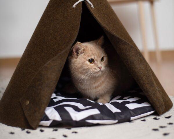 Домик для кошки говерла