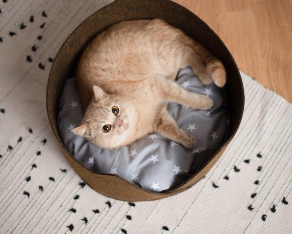 Кошка в лежаке